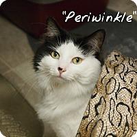 Adopt A Pet :: Periwinkle - Ocean City, NJ