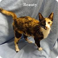 Adopt A Pet :: Beauty - Bentonville, AR