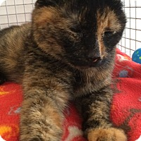Adopt A Pet :: Autumn - Trevose, PA