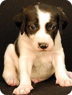 Hound (Unknown Type) Mix Puppy for adoption in Newland, North Carolina - Grimm