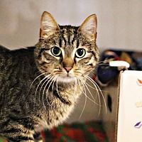 Adopt A Pet :: Ollie - Lincoln, NE