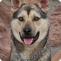 Adopt A Pet :: Thomas von Theobold - Los Angeles, CA