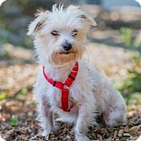 Adopt A Pet :: Georgie - Miami, FL