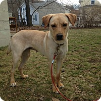 Adopt A Pet :: Bonnie - Valley Stream, NY