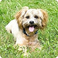 Adopt A Pet :: Kaboodle - Mocksville, NC