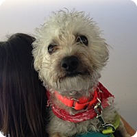 Adopt A Pet :: Perry - Mission Viejo, CA