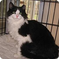 Adopt A Pet :: Geo - Colmar, PA