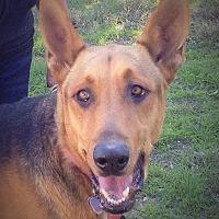 Adopt A Pet :: Spike - Santa Ana, CA