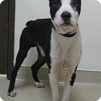 Adopt A Pet :: Reggie - Gary, IN