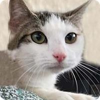 Adopt A Pet :: Cassie - Tiburon, CA