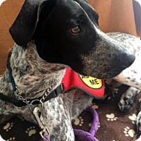 Adopt A Pet :: Remington - Ventura, CA