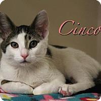 Adopt A Pet :: Cinco 17-0115 - Richardson, TX