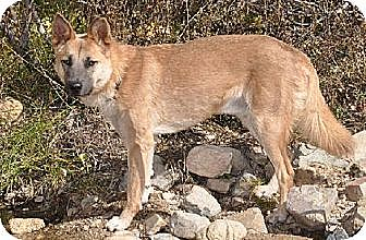 German Shepherd Dog Mix Dog for adoption in Newport Beach, California - Wyoming