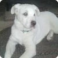 Adopt A Pet :: Gunner - New Boston, NH
