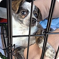 Adopt A Pet :: Boston - Lake Forest, CA