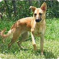 Adopt A Pet :: Miley - Minneola, FL