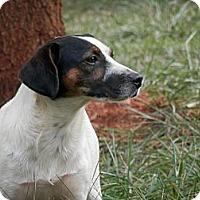Adopt A Pet :: Henry - hartford, CT