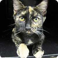 Adopt A Pet :: Mary Margeret - Albany, NY