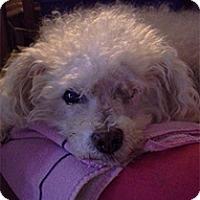 Adopt A Pet :: Papi - Madison, WI