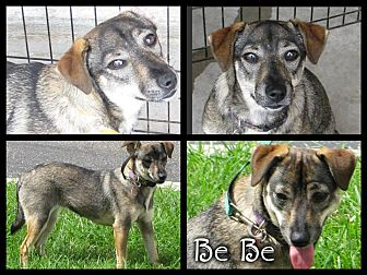 Terrier (Unknown Type, Medium)/Terrier (Unknown Type, Medium) Mix Dog for adoption in Crowley, Louisiana - BeBe