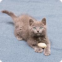 Adopt A Pet :: Ursula - Chicago, IL