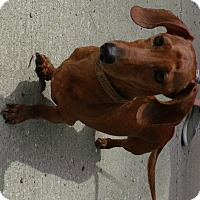 Adopt A Pet :: Pepe - Muskegon, MI