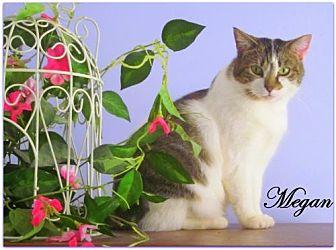 Domestic Shorthair Cat for adoption in Culpeper, Virginia - Megan