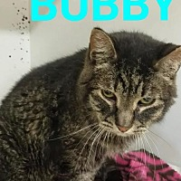 Adopt A Pet :: Bubby - Colfax, IL