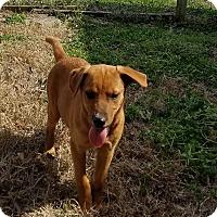 Adopt A Pet :: Skylar pending adoption - Manchester, CT