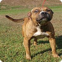 Adopt A Pet :: Bruno - St. Cloud, FL