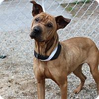 Adopt A Pet :: Zu Zu - Muskegon, MI