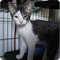 Adopt A Pet :: Cacey - Fort Lauderdale, FL
