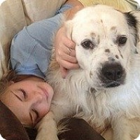 Adopt A Pet :: Lily Ann - New Boston, NH