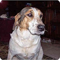 Adopt A Pet :: DaisyLu - Scottsdale, AZ
