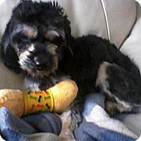 Adopt A Pet :: Charley - Plainview, NY