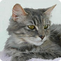 Adopt A Pet :: Silver Bell - The Colony, TX