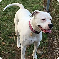 Adopt A Pet :: Jana - hollywood, FL