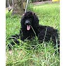 Adopt A Pet :: Lucy Lu