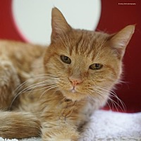 Adopt A Pet :: Bisque - Tucson, AZ