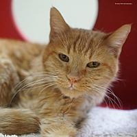 Adopt A Pet :: Bisque - Tucson, AZ