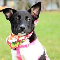 Adopt A Pet :: Fanny - San Francisco, CA