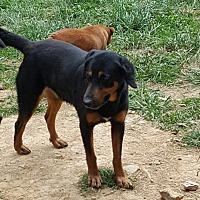 Adopt A Pet :: Jackson - Lexington, KY