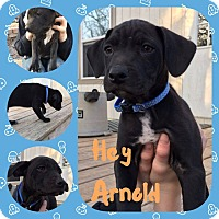 Adopt A Pet :: Hey Arnold - Hearne, TX