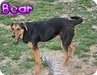 Hound (Unknown Type) Mix Puppy for adoption in Nixa, Missouri - Bear # 973