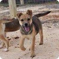 Adopt A Pet :: Scarlett - Rexford, NY