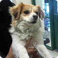 Adopt A Pet :: TRABIESO - Murray, UT