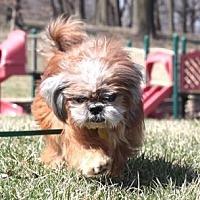 Adopt A Pet :: Mayer 15 (Bonded with Oscar 17) - DeSoto, IA