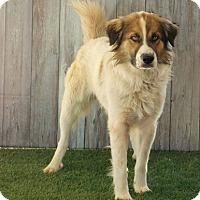 Adopt A Pet :: Manchester - Lake Panasoffkee, FL