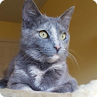 Adopt A Pet :: Dillia - Huntsville, AL