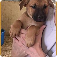 Adopt A Pet :: Braveheart - DeForest, WI